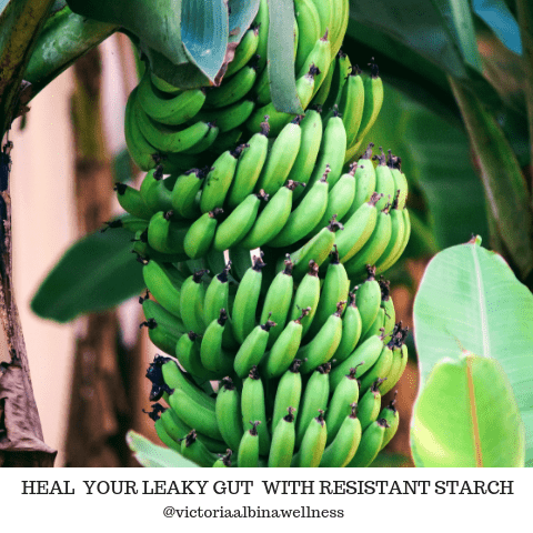 heal leaky gut with resistant starch